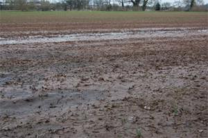 Conventional seedbeds can have poor drainage