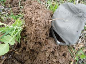 Cover crops improve soil fertility