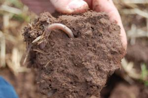 healthy soil with earth worm