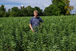 David Walston, Thriplow Farms, in spring beans mid July 2014