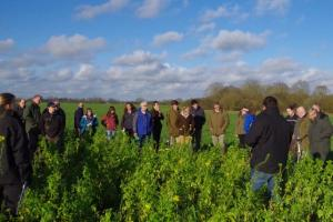 Farmers looking at cover crops before sugar beet