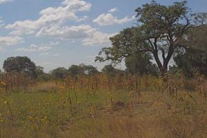 Farming in Zambia - empty bush land