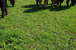 Using herbal leys in an arable rotation